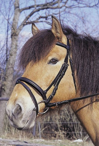 Kerbl-Hoofdstel-Engels-Classic-bruin